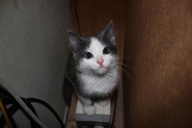 Приучи котенка к туалету